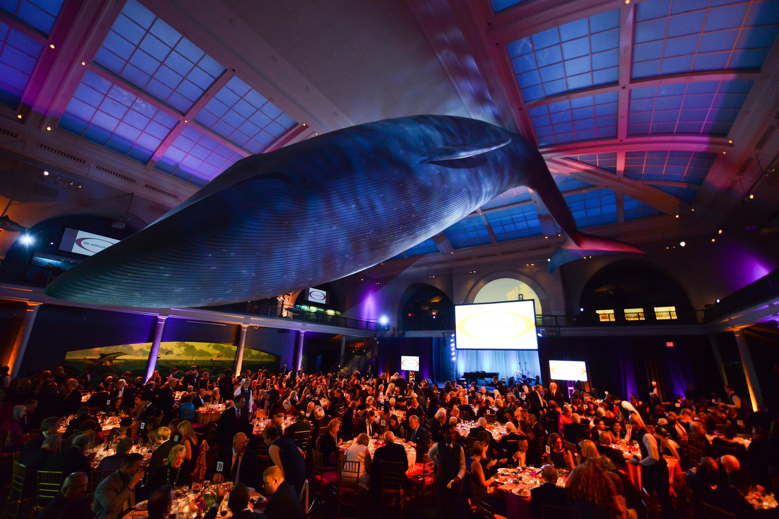 Atmosphere Whale Room 2.jpg
