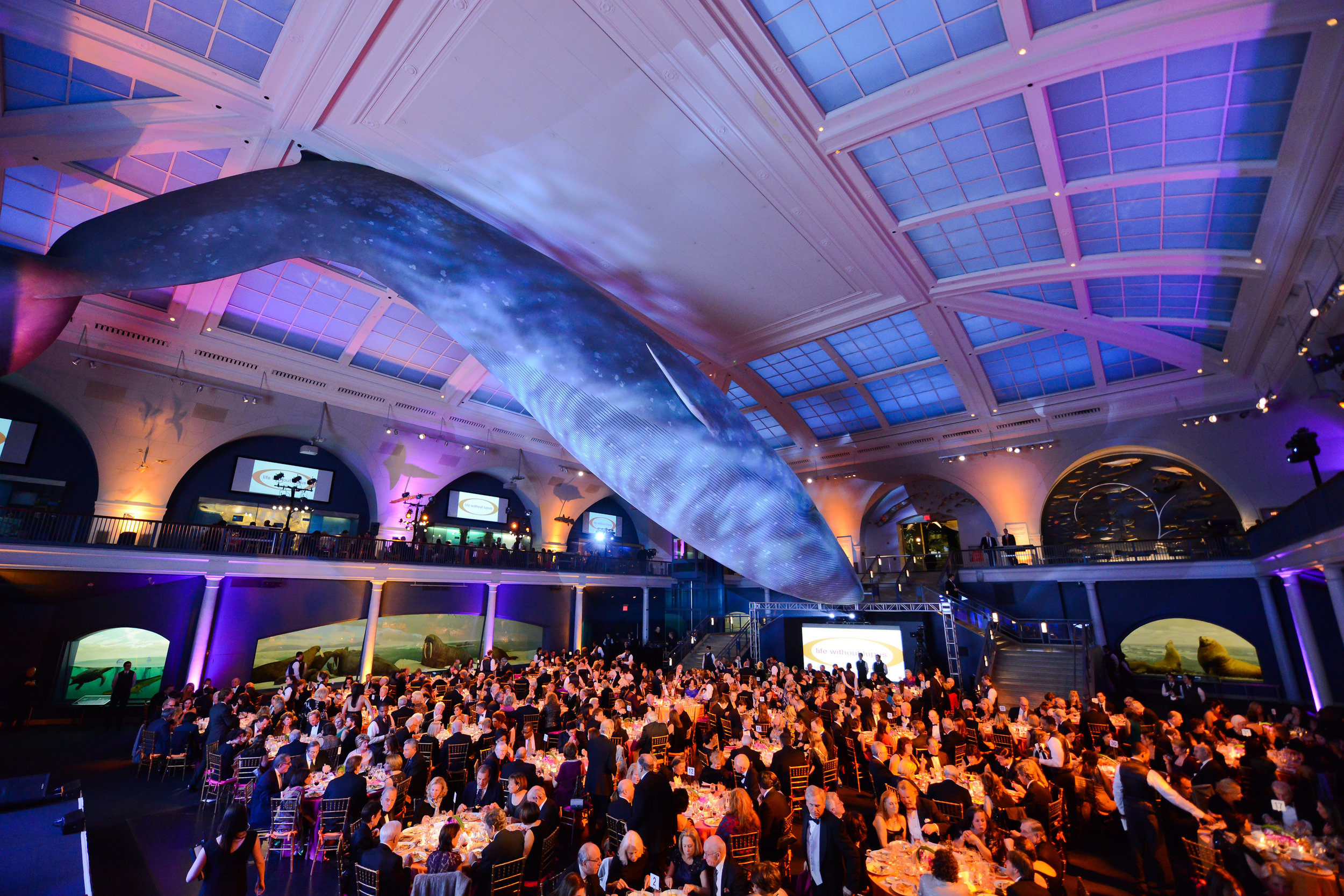 Atmosphere Whale Room 5.jpg