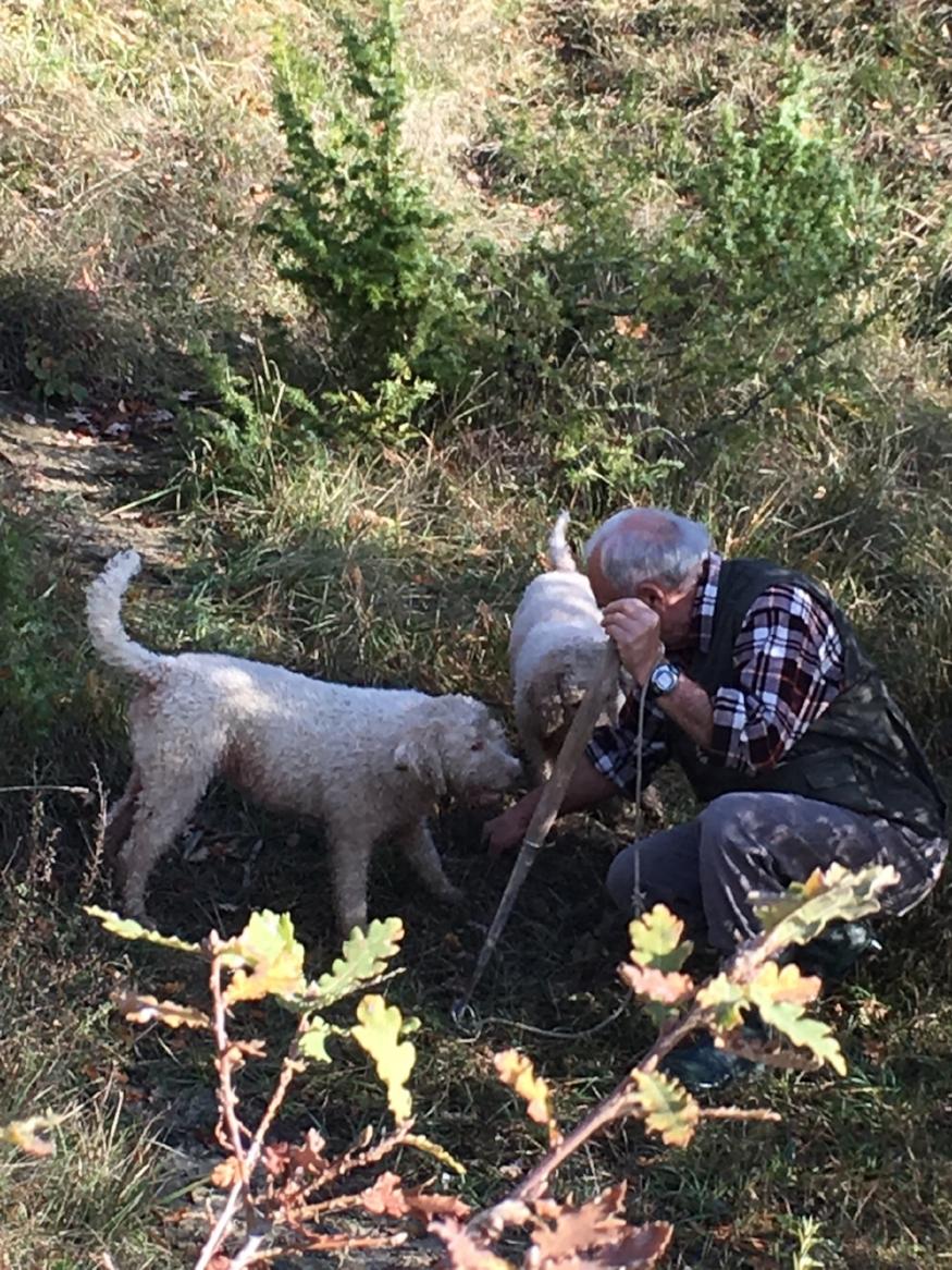 dog and farmer.jpg