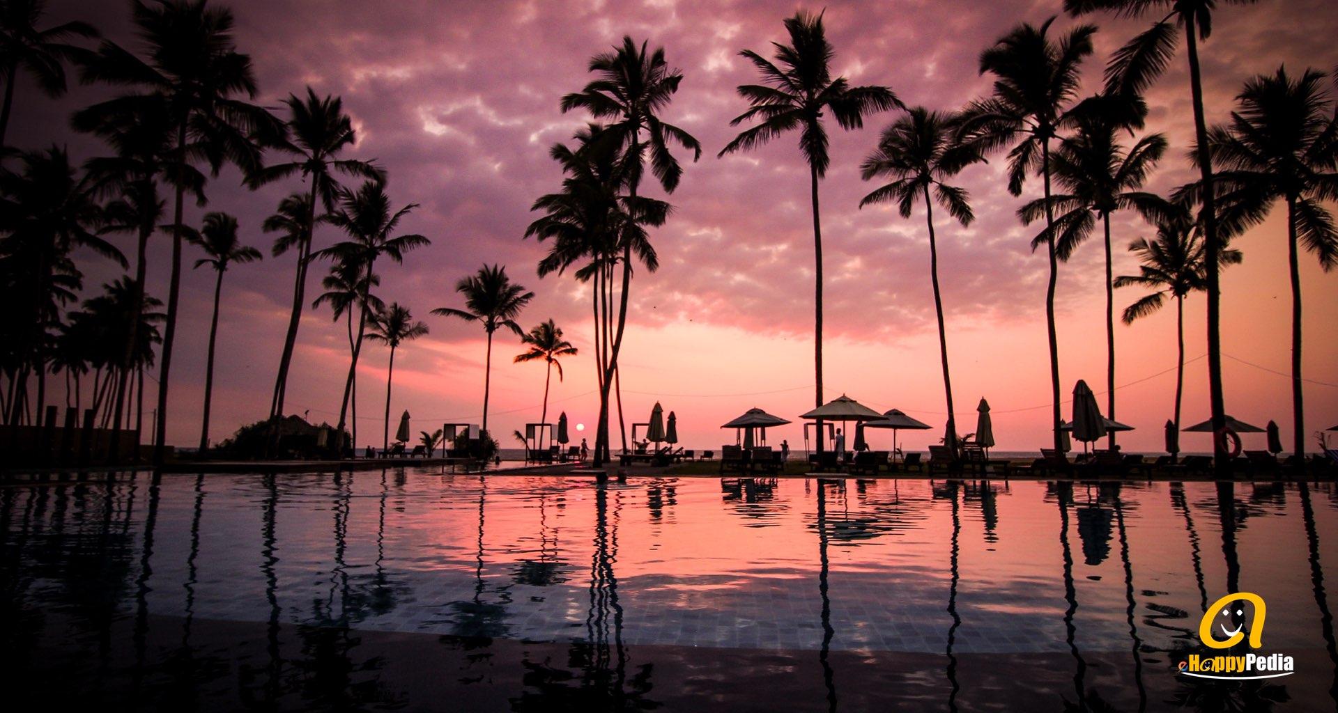 blog - sunset pool beach palm tree.jpeg