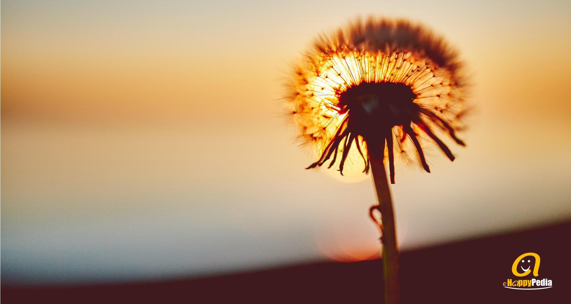 blog - sunset flower.jpeg