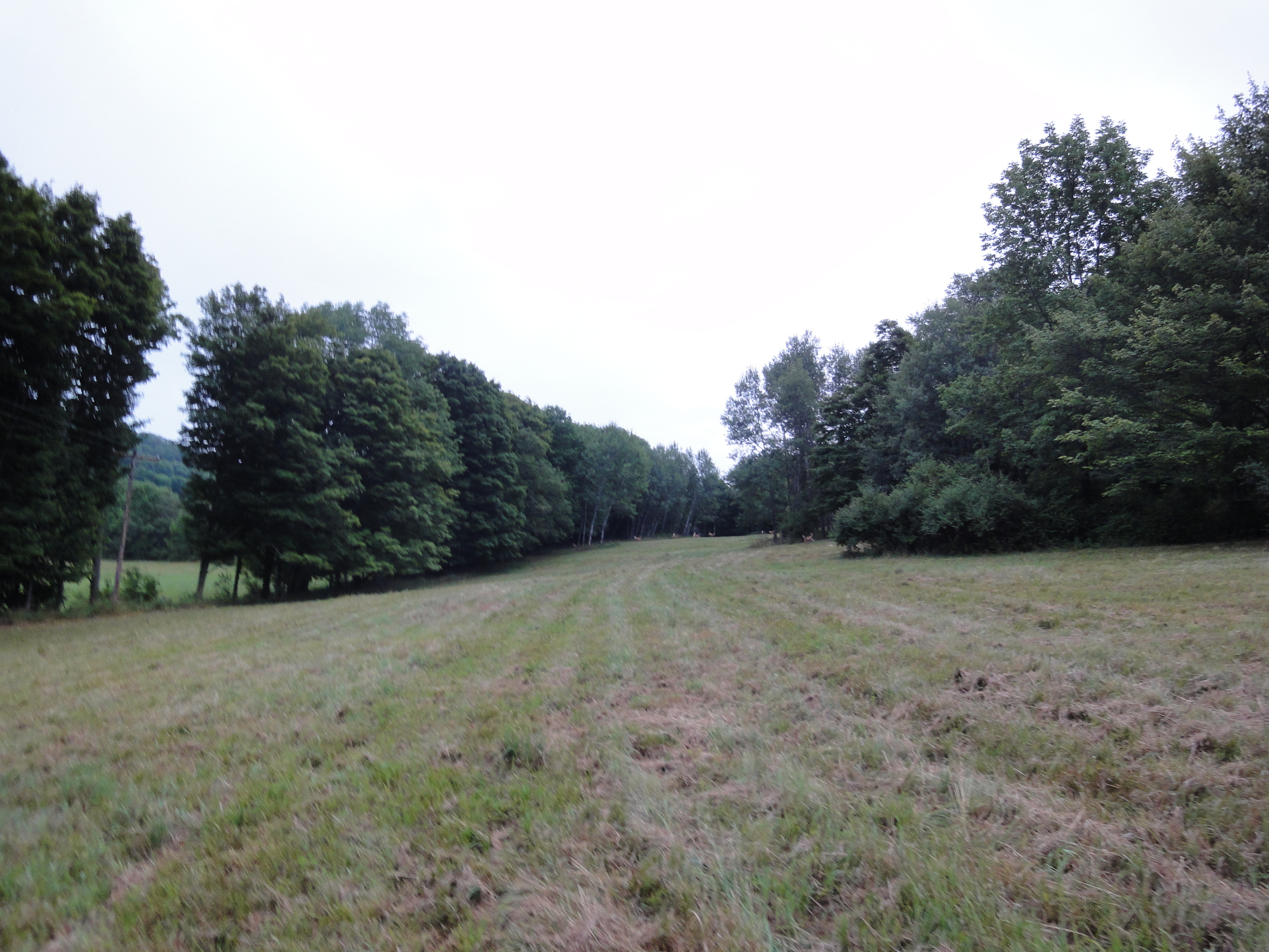 We had 13.2 acres to wander on -- mostly hills and some woods. Calvin & Hobbes would approve.