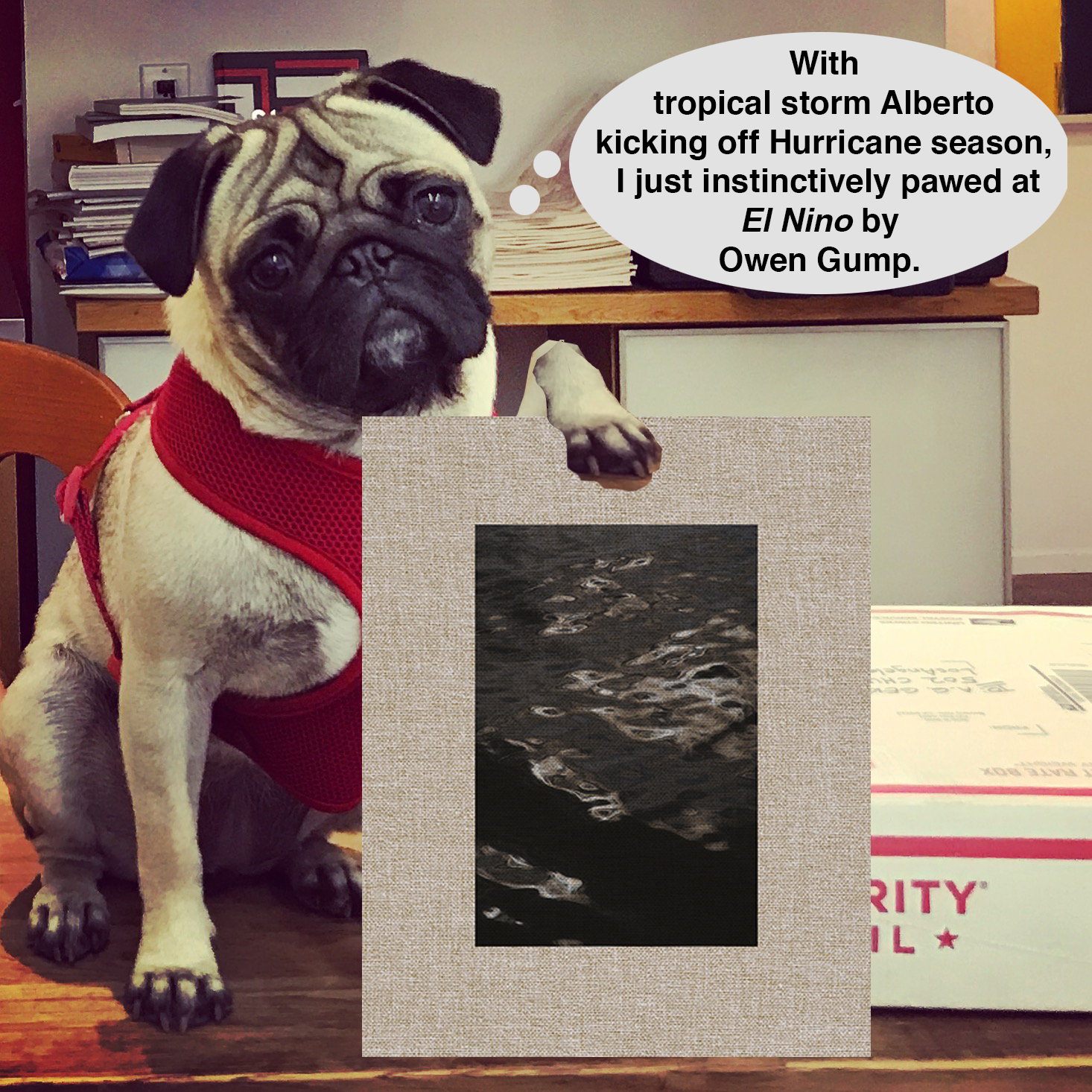 Pug Pick of the day24.png