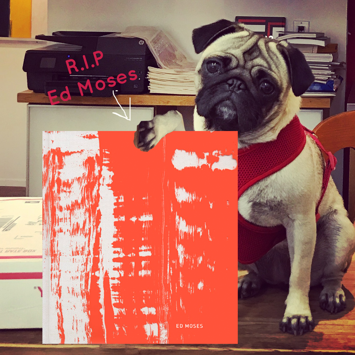 Pug Pick of the day1_18_18.png