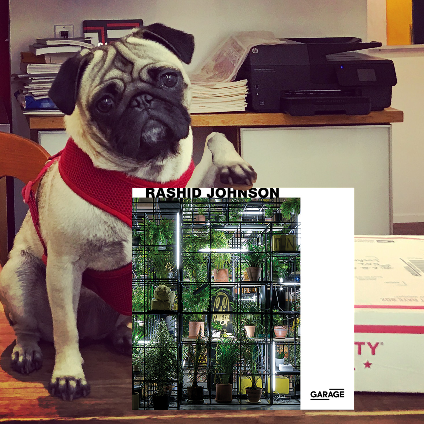 Pug Pick of the day15.png