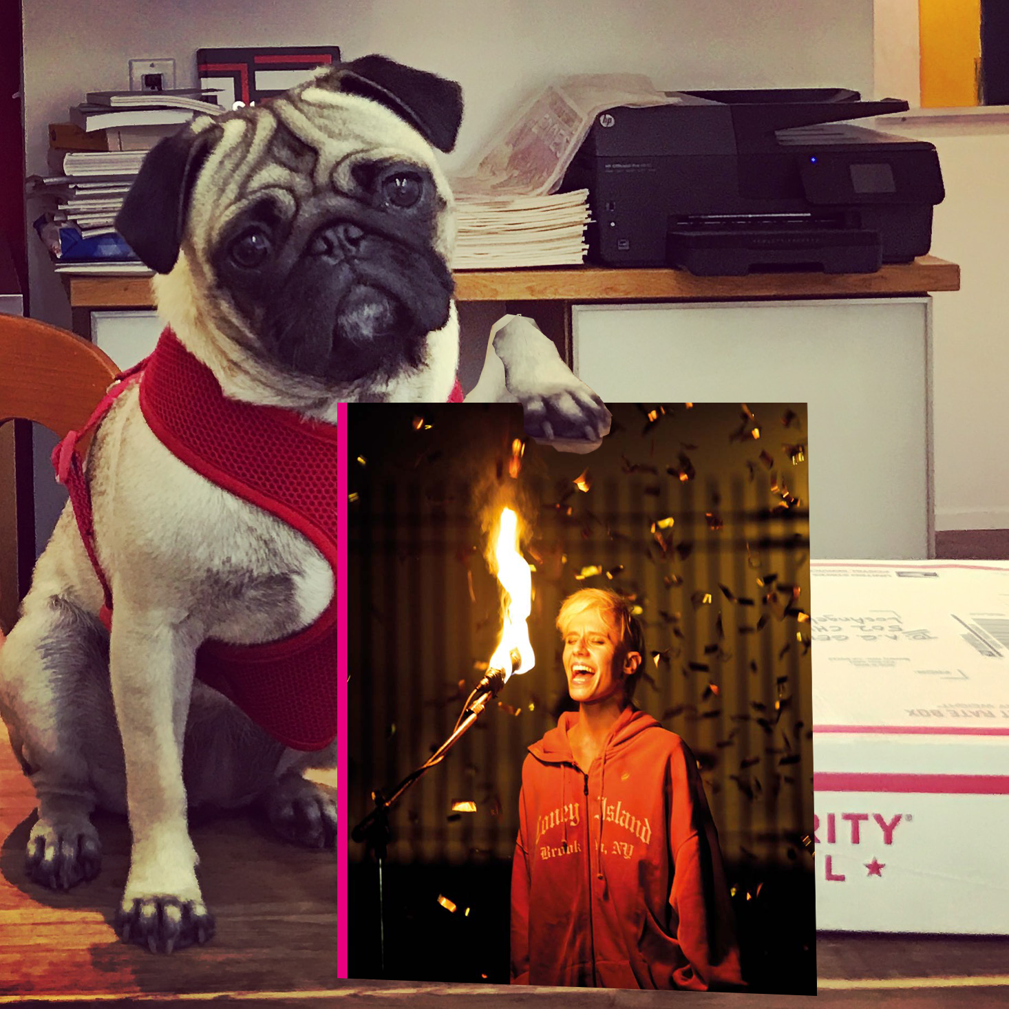 Pug Pick of the Week11.png