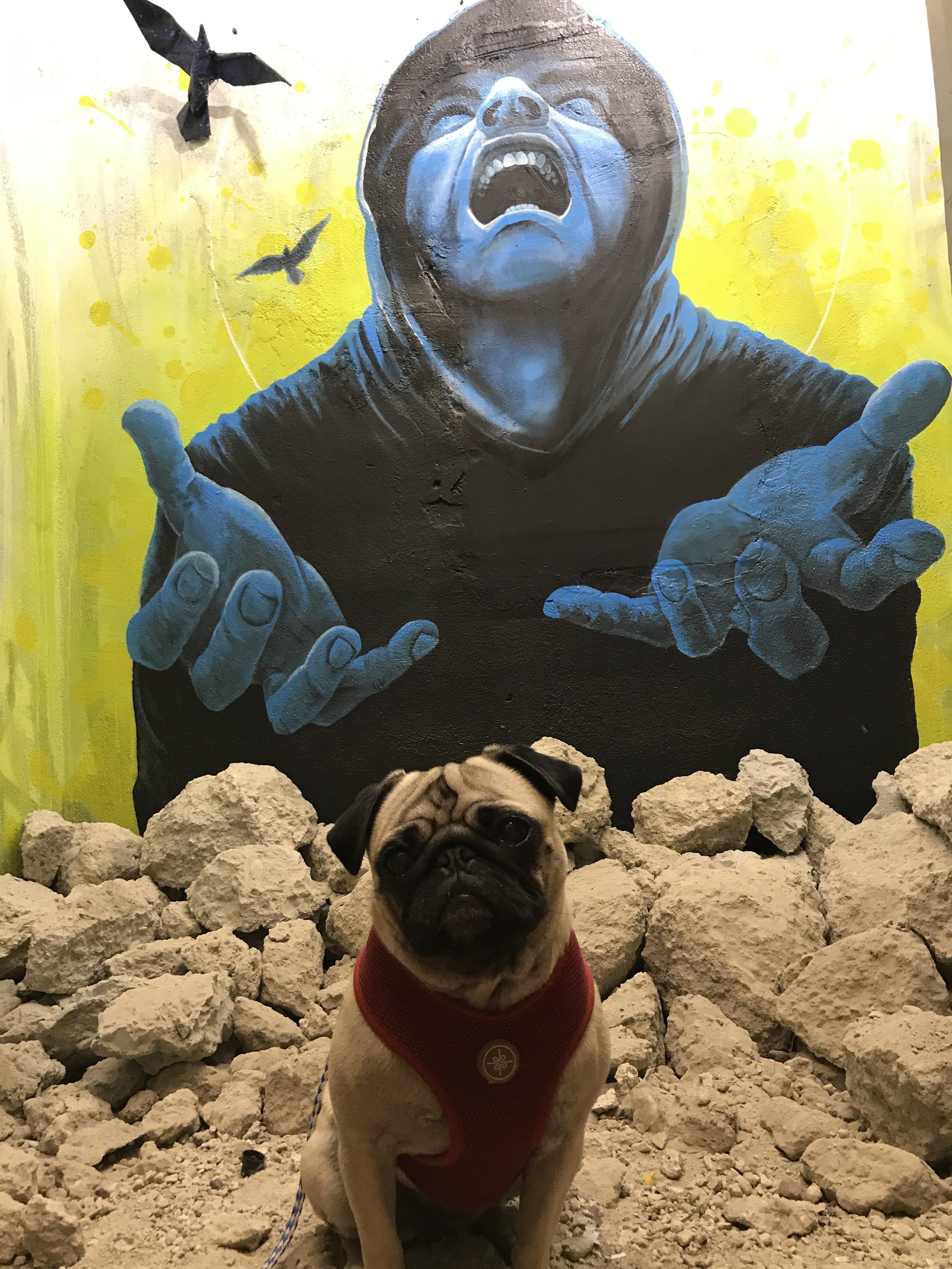 Sel behind Marlowe the shop Dog