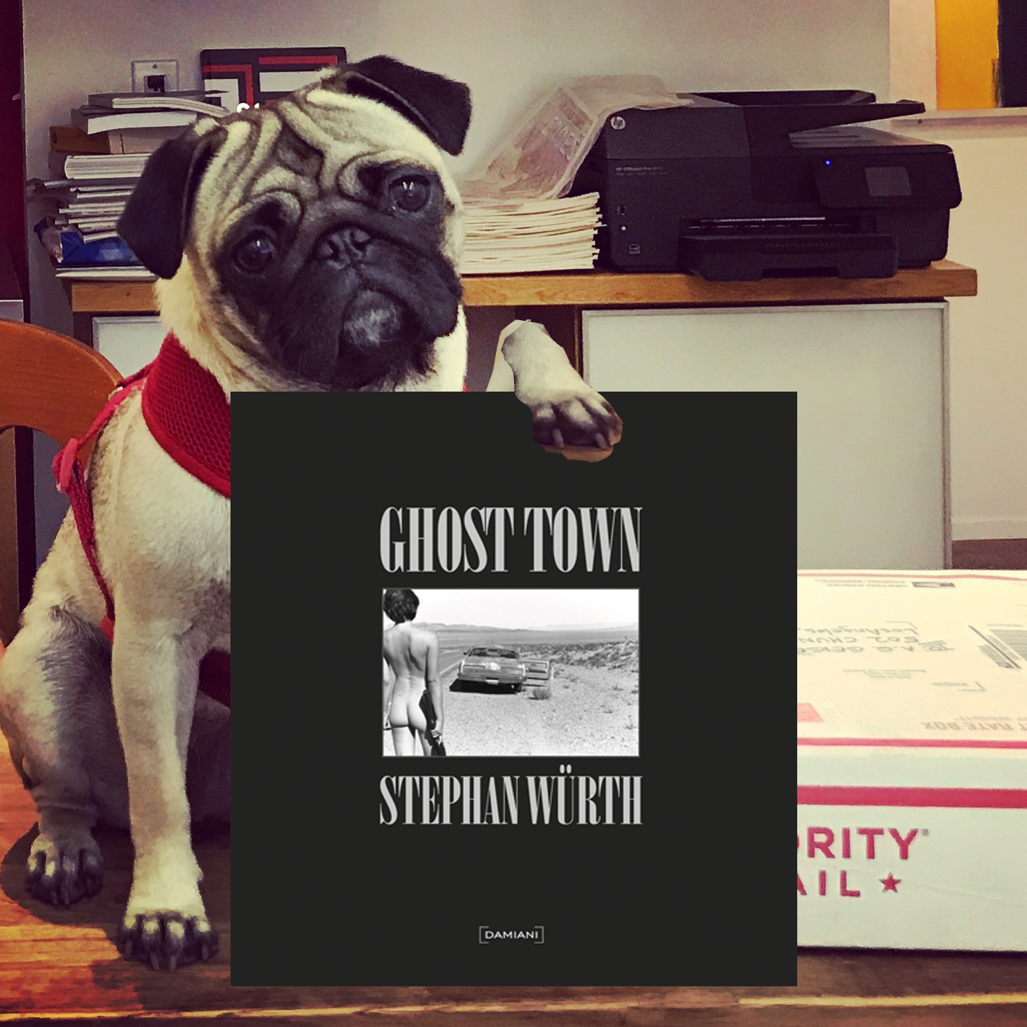 Pug Pick of the day26.png