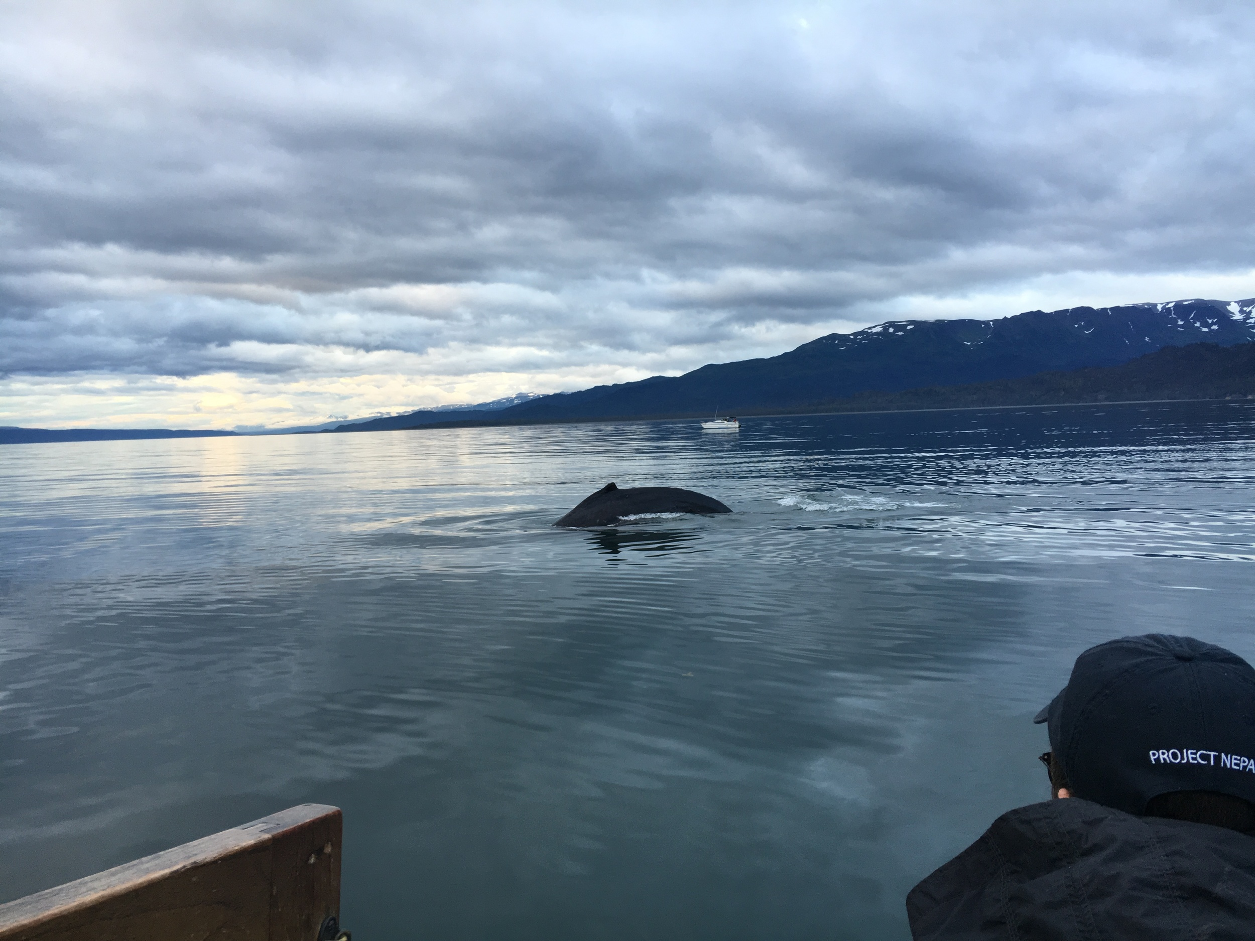 Oh, hey there whale!