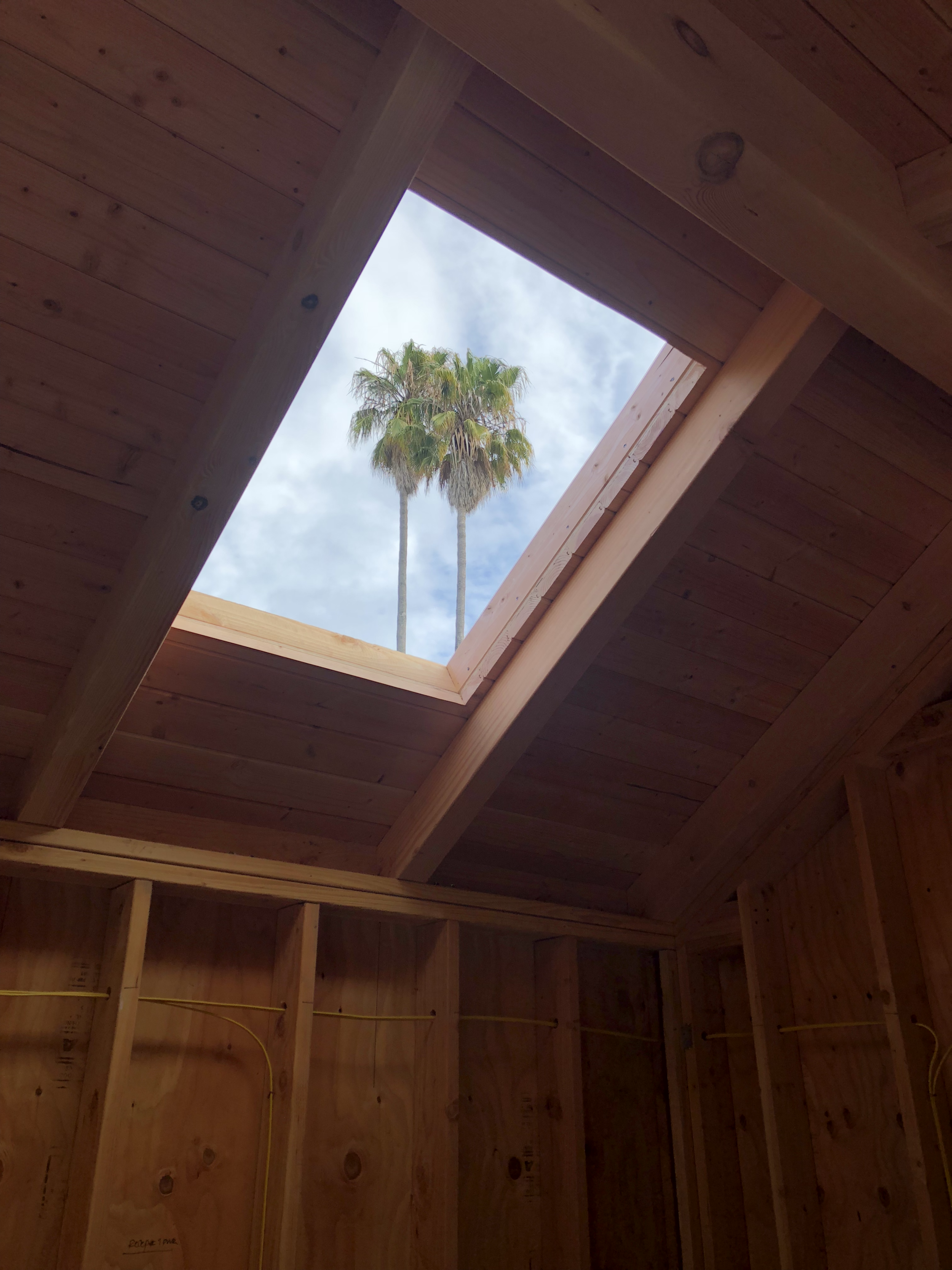palmtrees in skylight.png