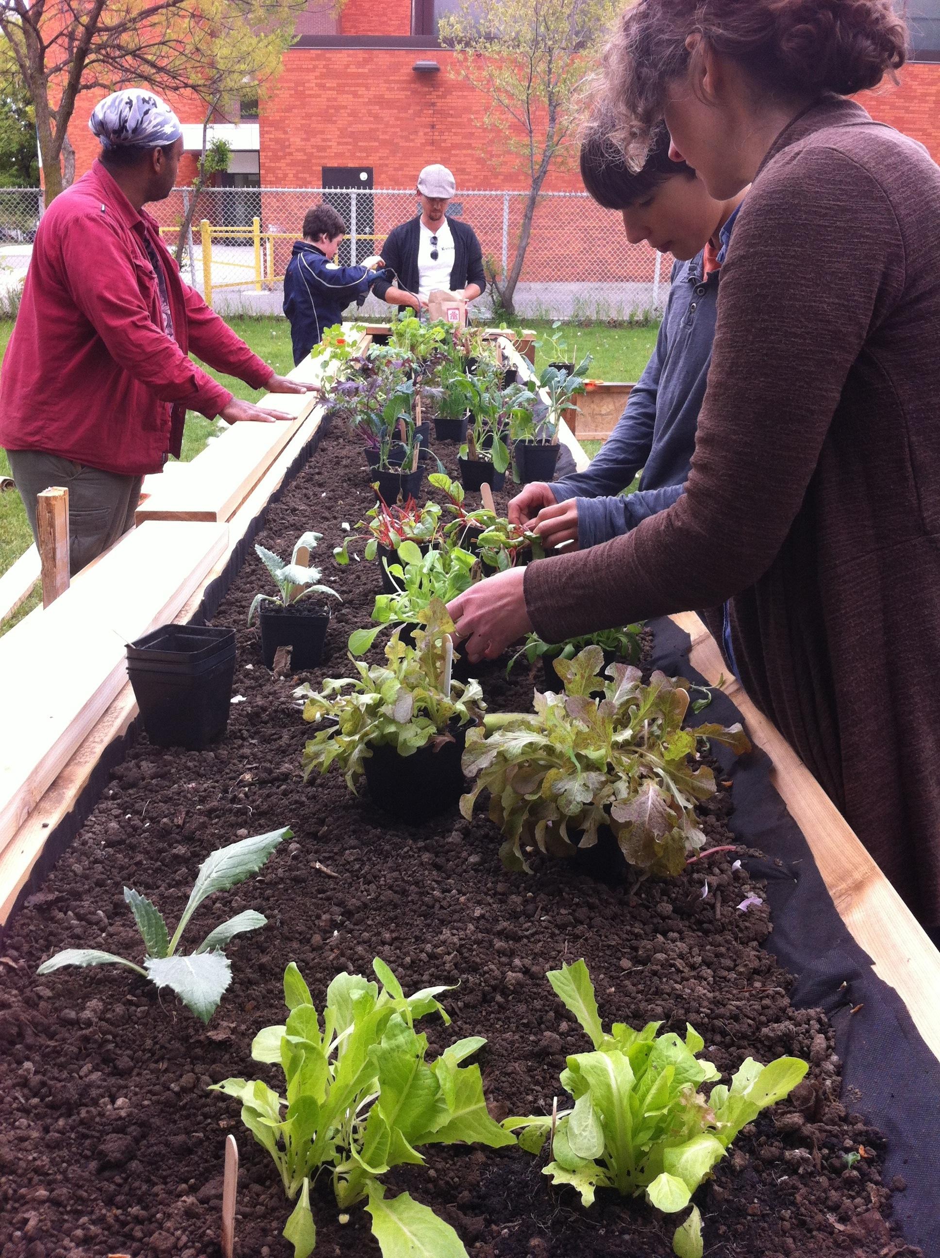 Teaching Gardens-7.jpg