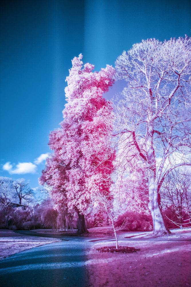 infraredkewgardens.jpg