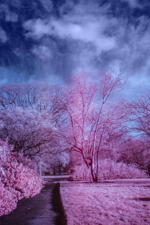 infraredkewgardens1.jpg