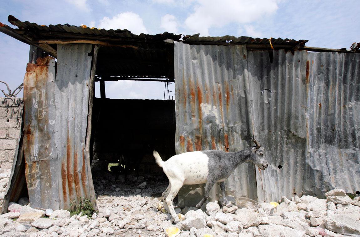 Haiti Earthquake Sun-Times 40.jpg