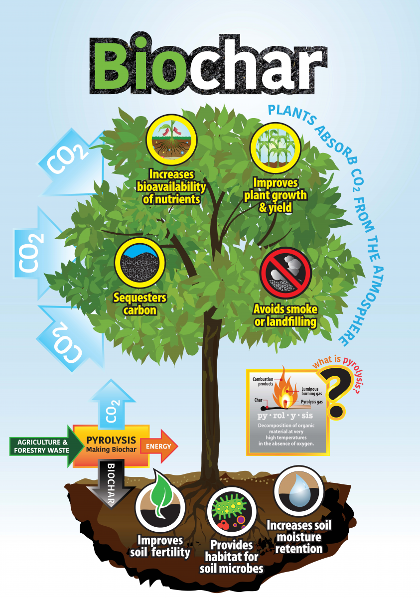 Biochar infographic.png