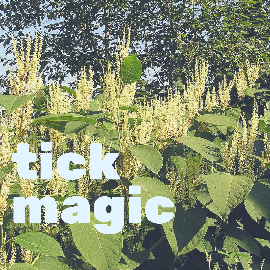 Thursday May 24th - join Wild Gather for the 411 on tick prevention and care through the lens of herbal first aid. we're gonna hash it out, whine it out, shed our fears and learn practical skills for living in tick city.6:30-8:30pm, $20-35 sliding scale, at Good Fight Herb Shop ~ 253 1/2 Warren St., Hudson