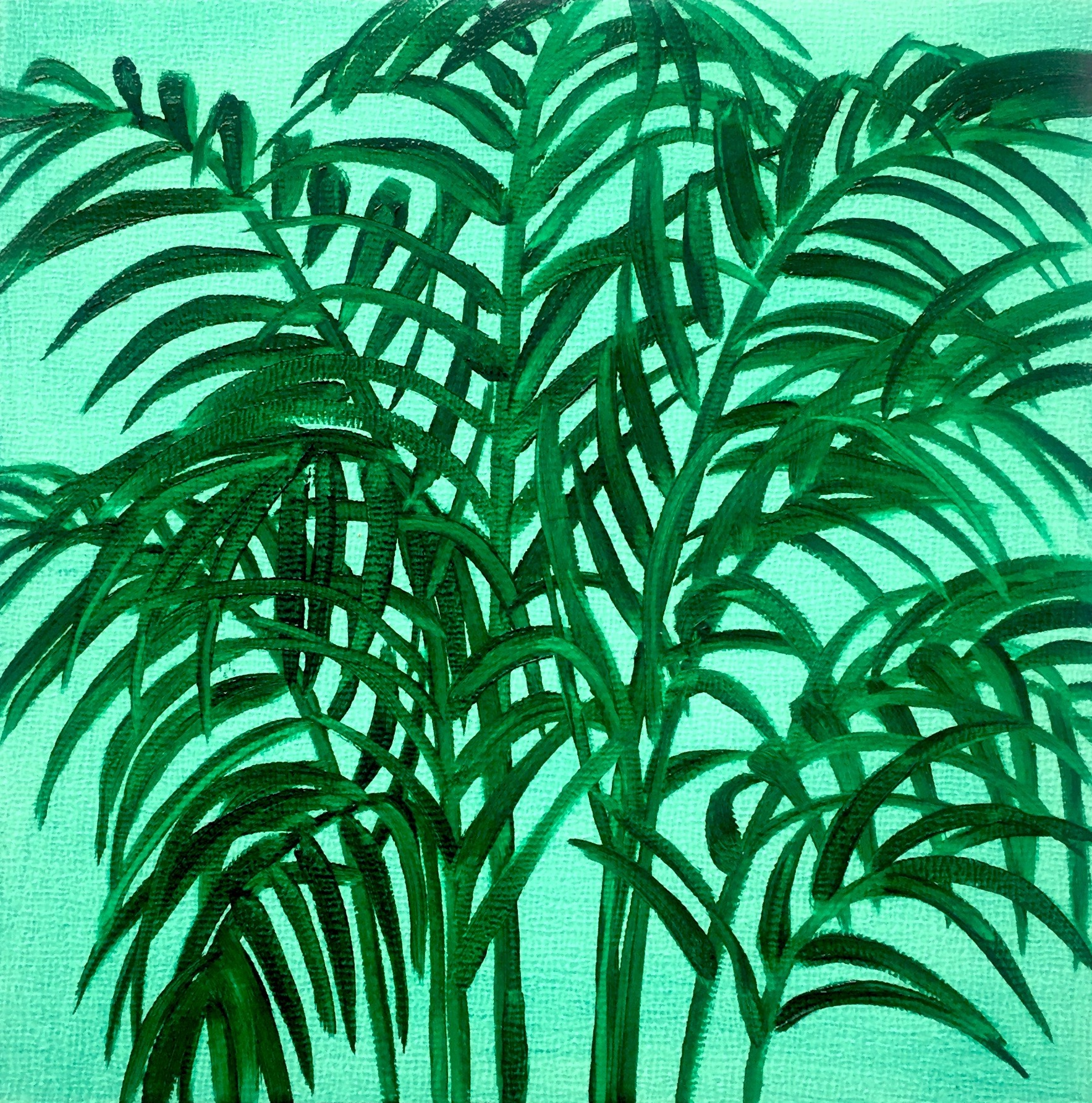 Tropical Palm Study