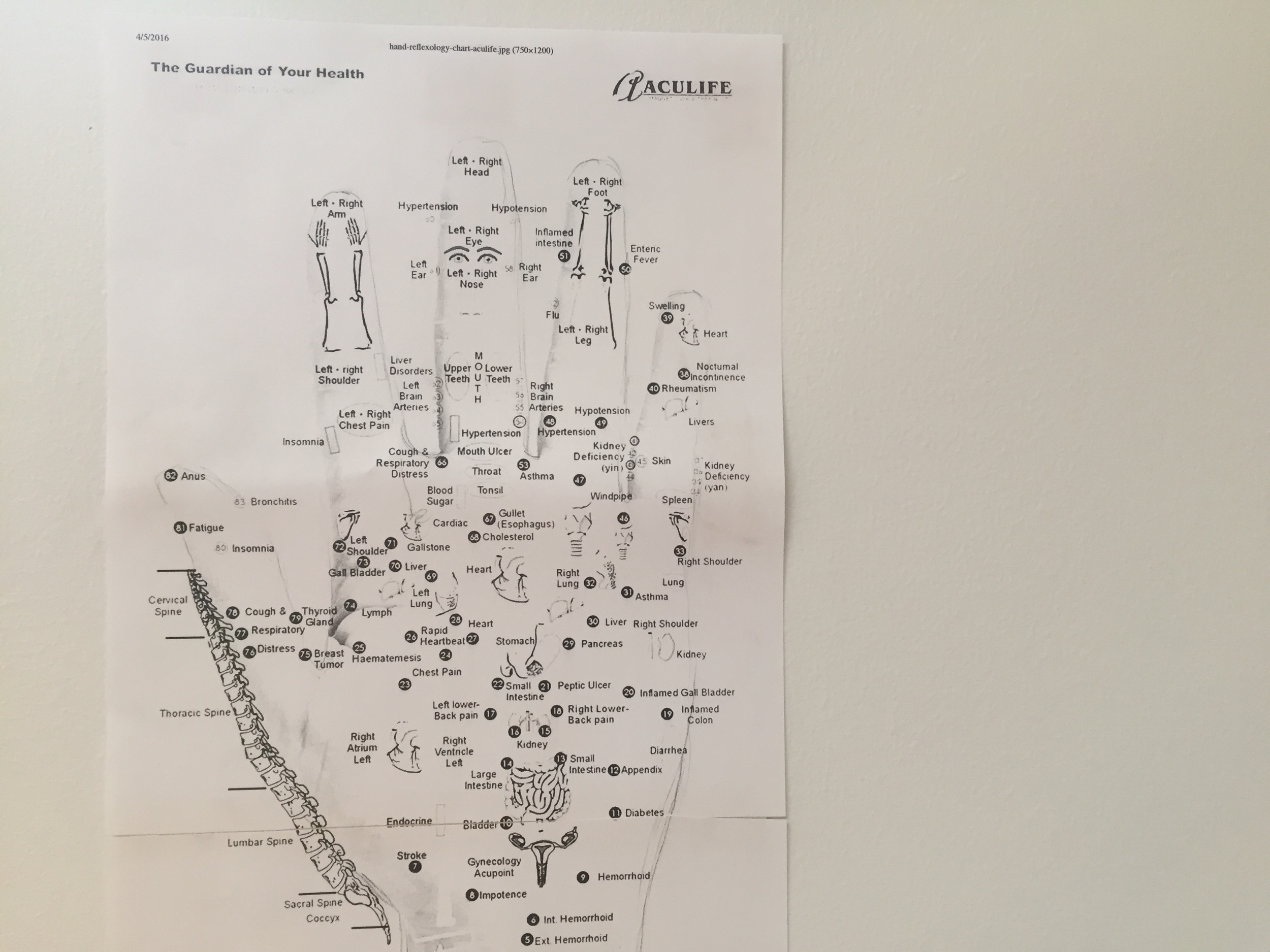 Printed acupuncture chart found in Combs' studio. Photograph: Christopher Squier.