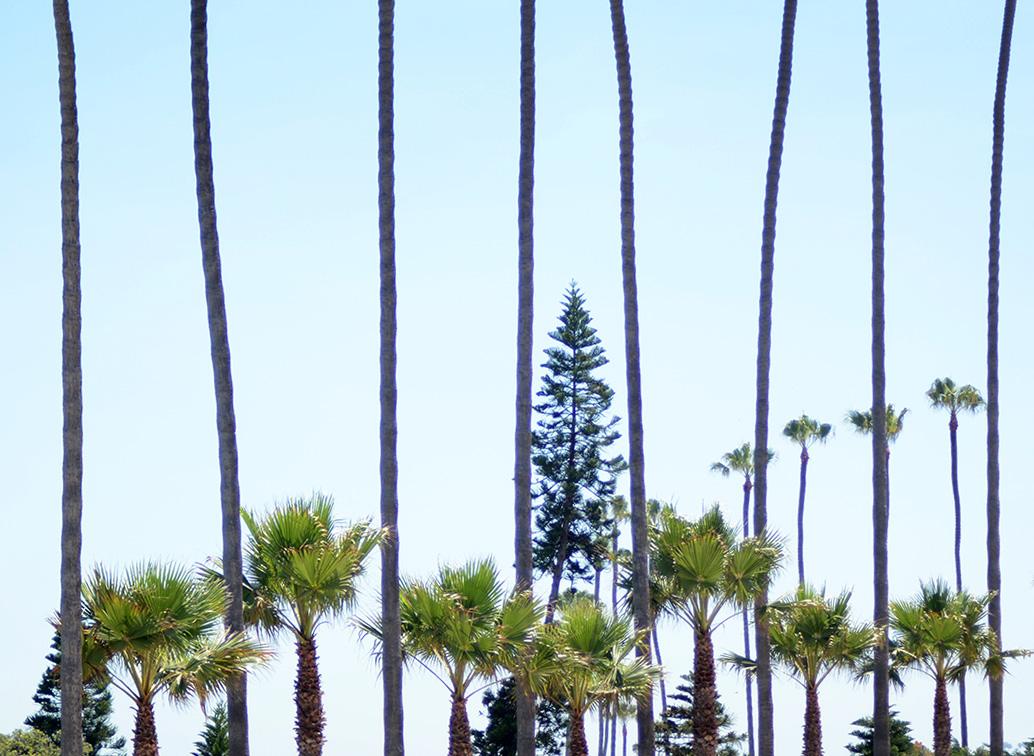 LaJolla-Trees.jpg