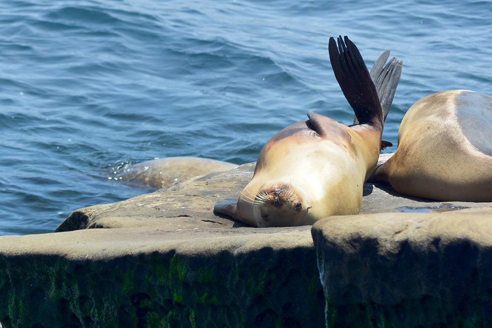 Seals-3.jpg