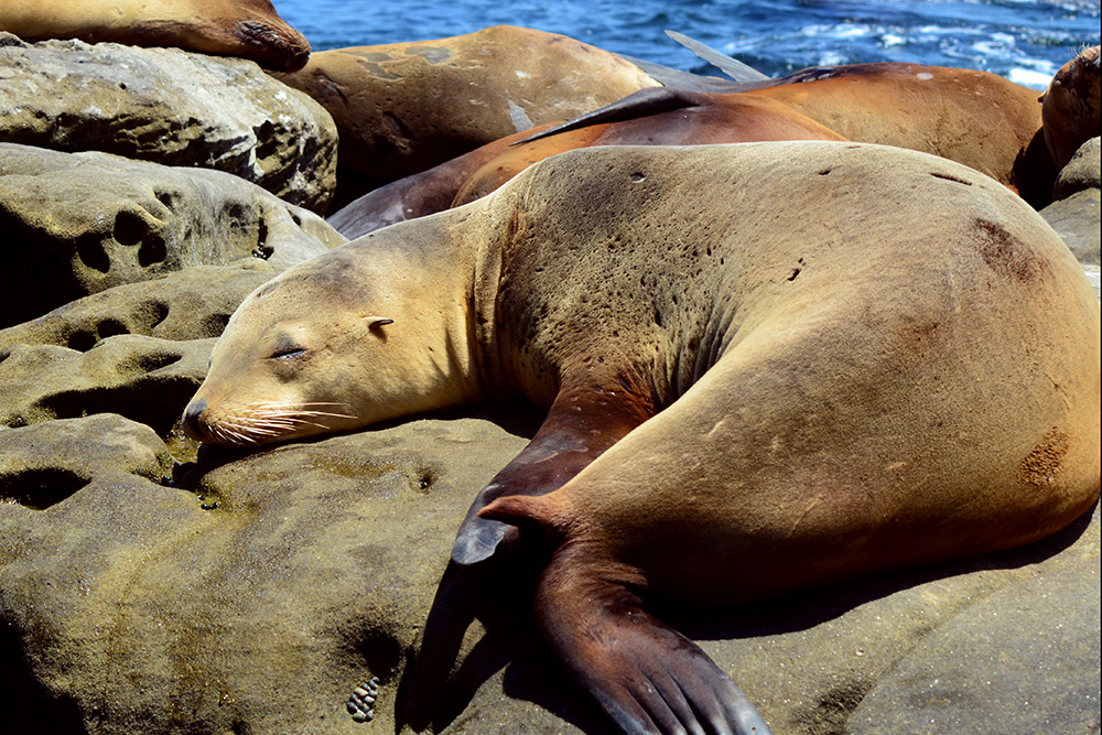 Seals-6.jpg