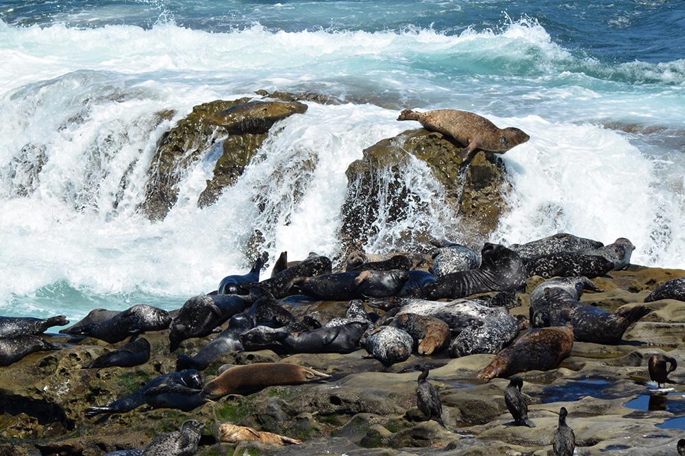 Seals-10.jpg
