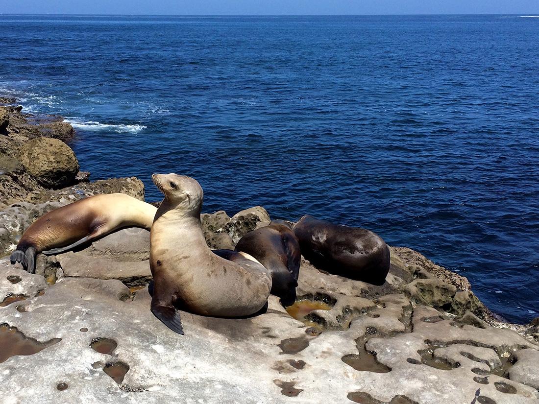 Seals-12.jpg