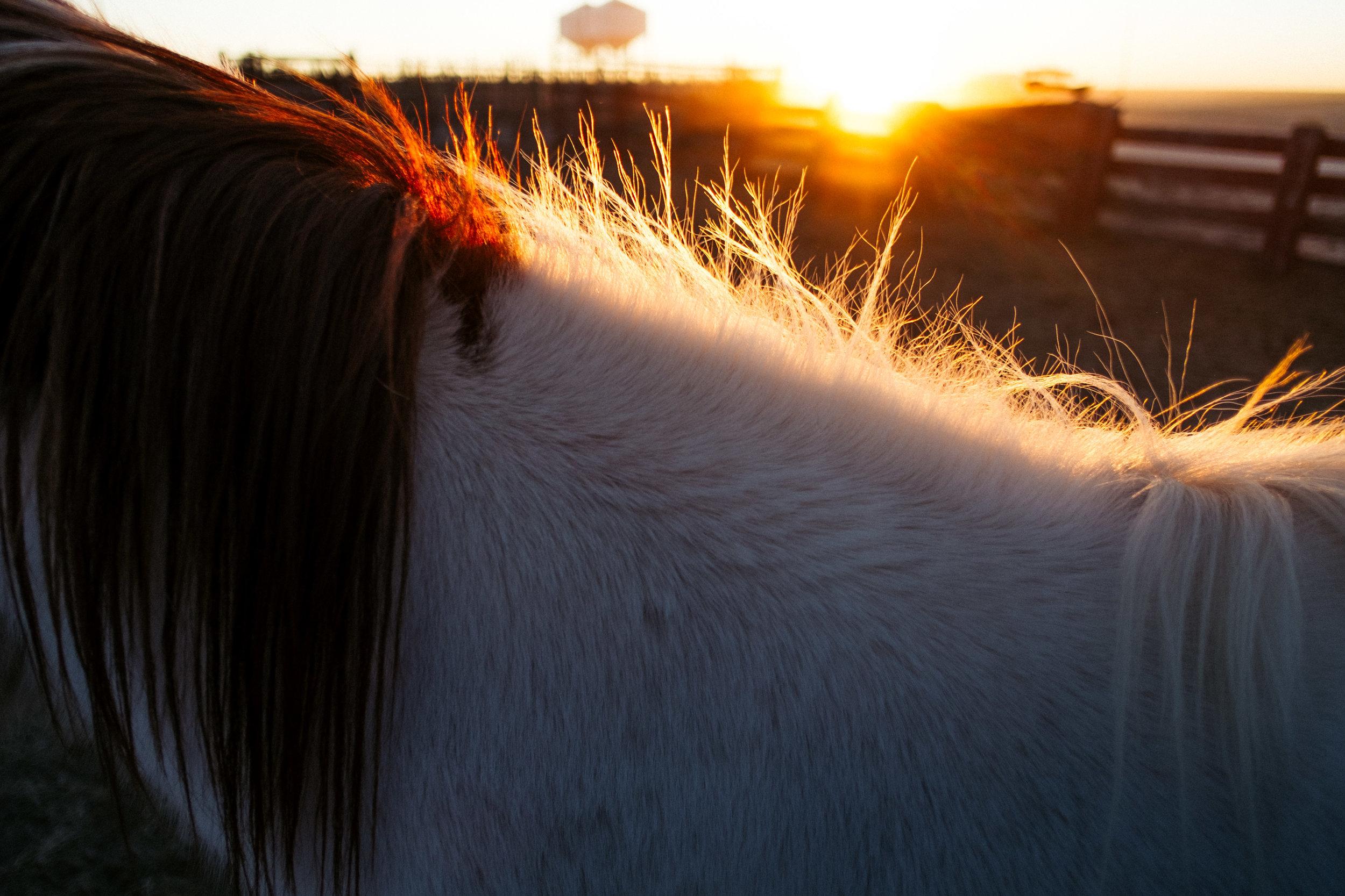 Wyatt + Cattle Sort-7.jpg