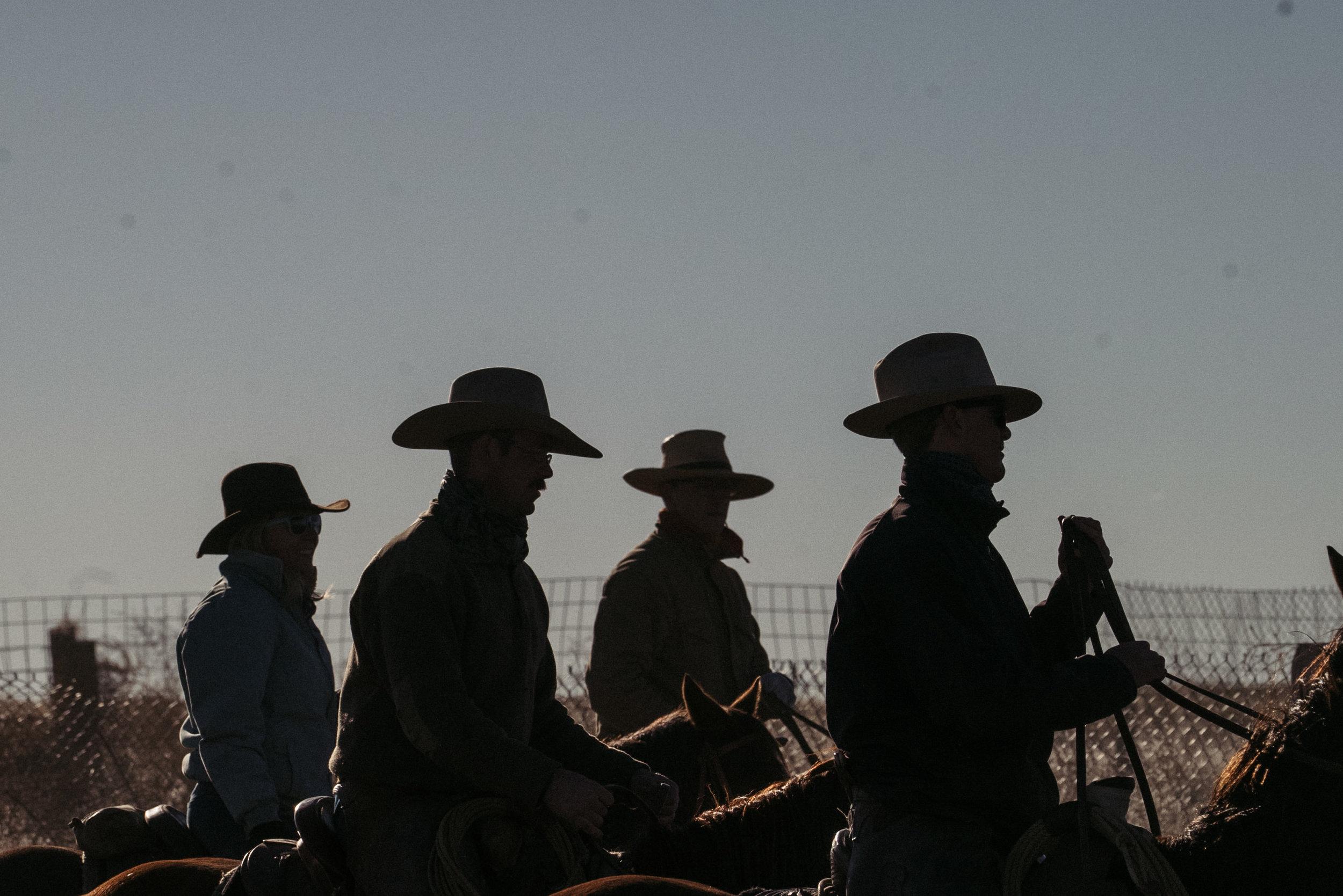 Wyatt + Cattle Sort-22.jpg