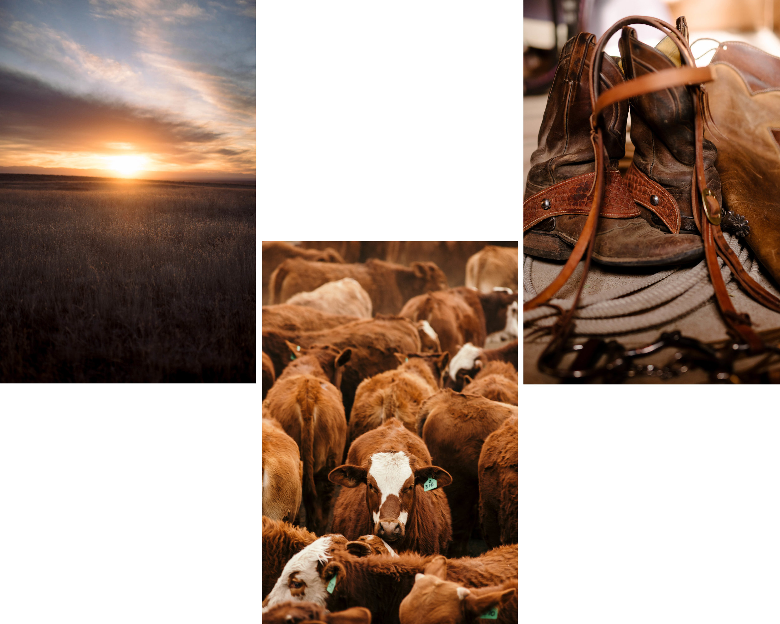 Ranchlands-56 copy.jpg