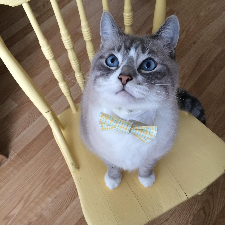 Chai on chair.jpg