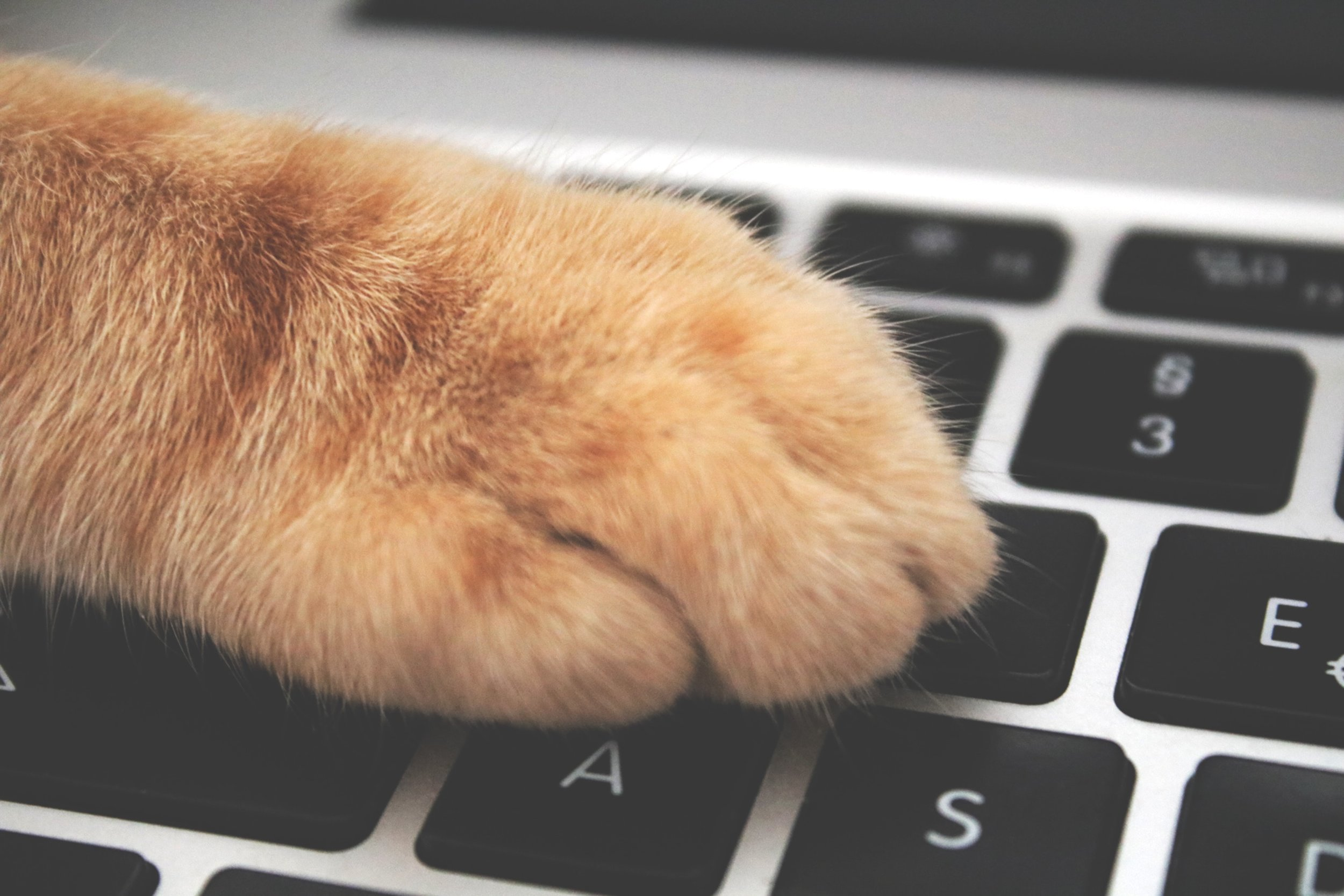 adorable-animal-cat-1440387.jpg