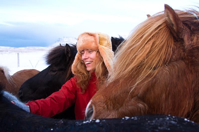 meeting our friendly horses