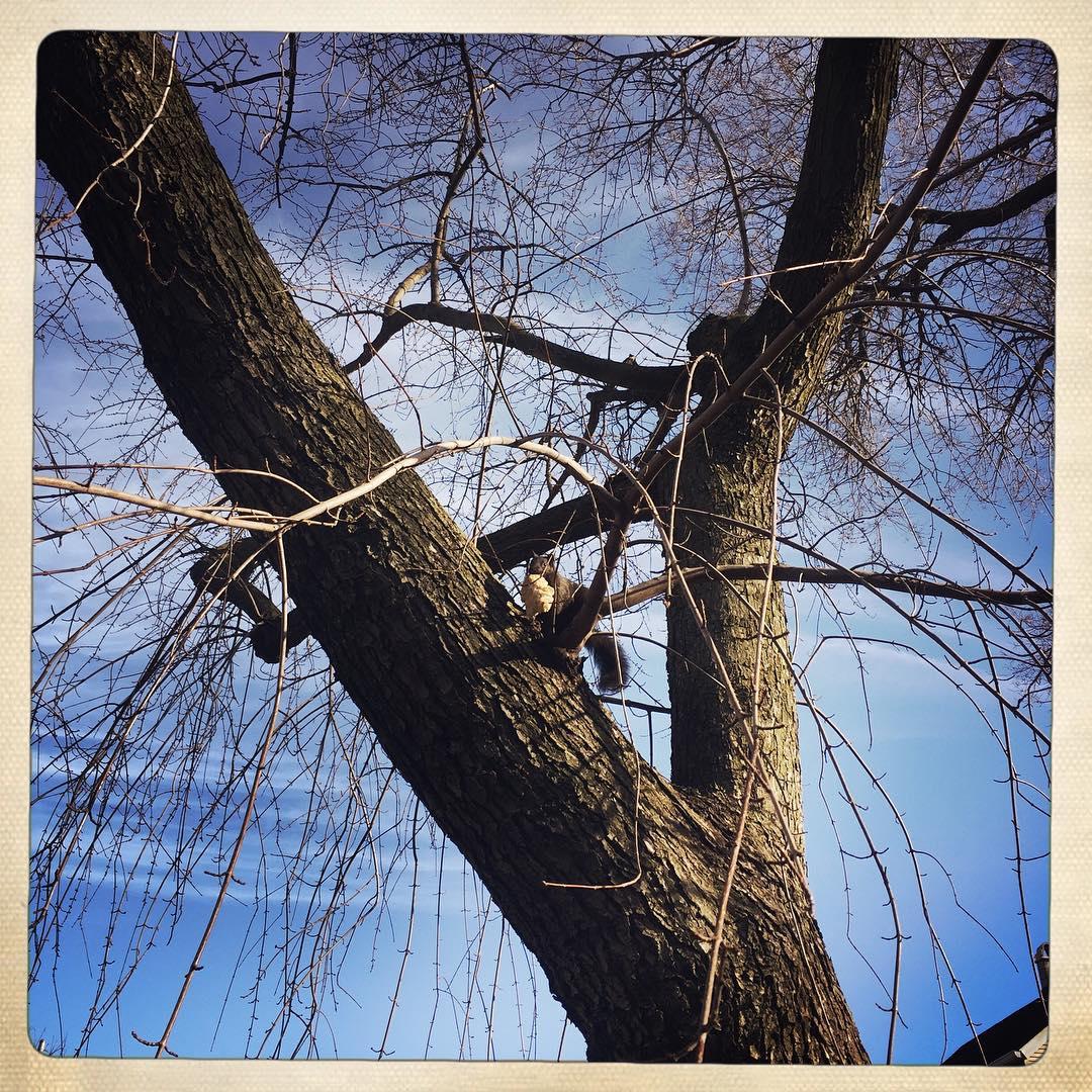 Day 23: squirrel xmas.