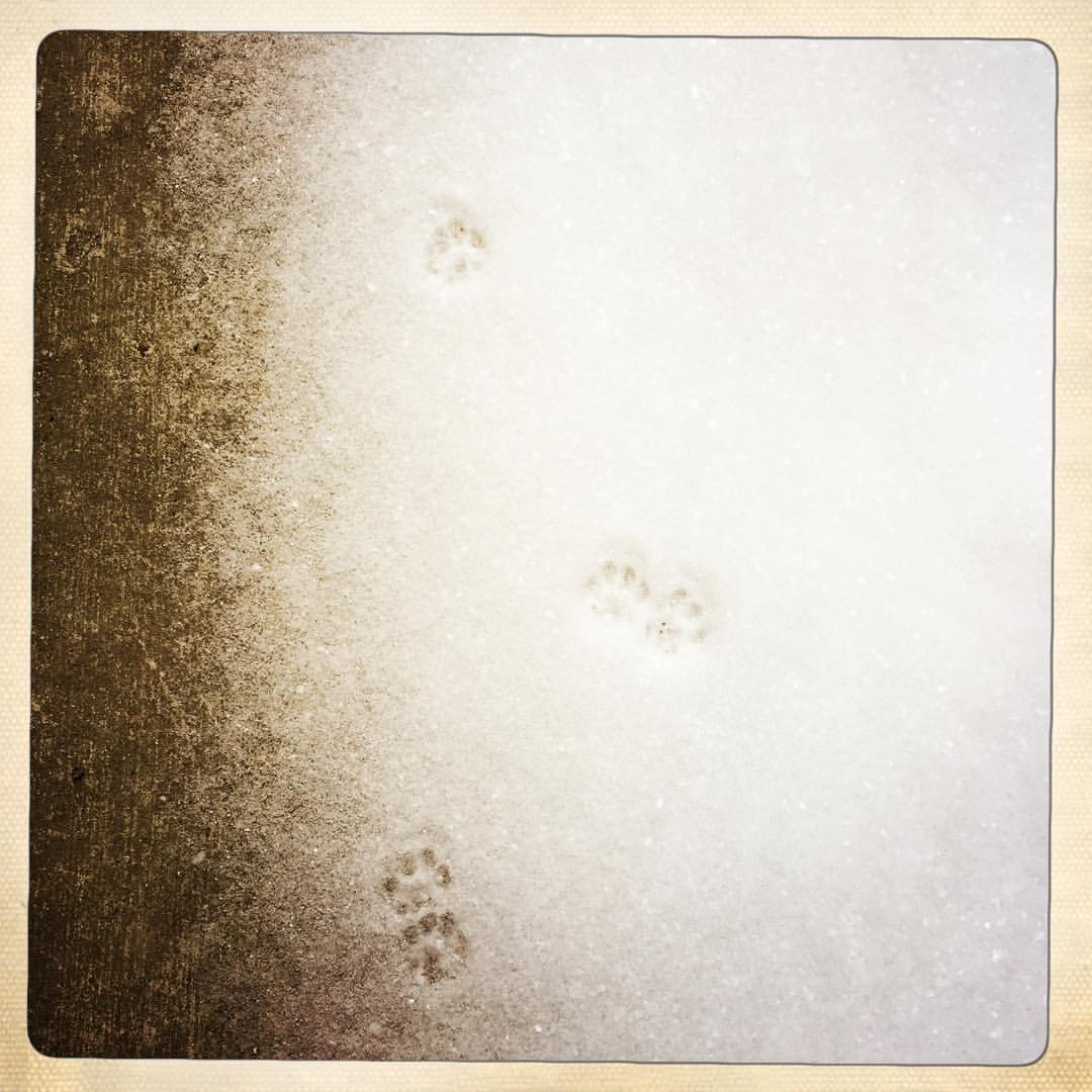 Day 48: tiny paw prints from an overnight visitor.