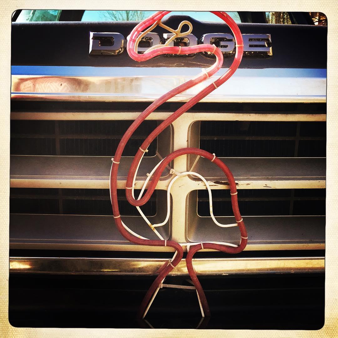 Day 79: flamingo truck.