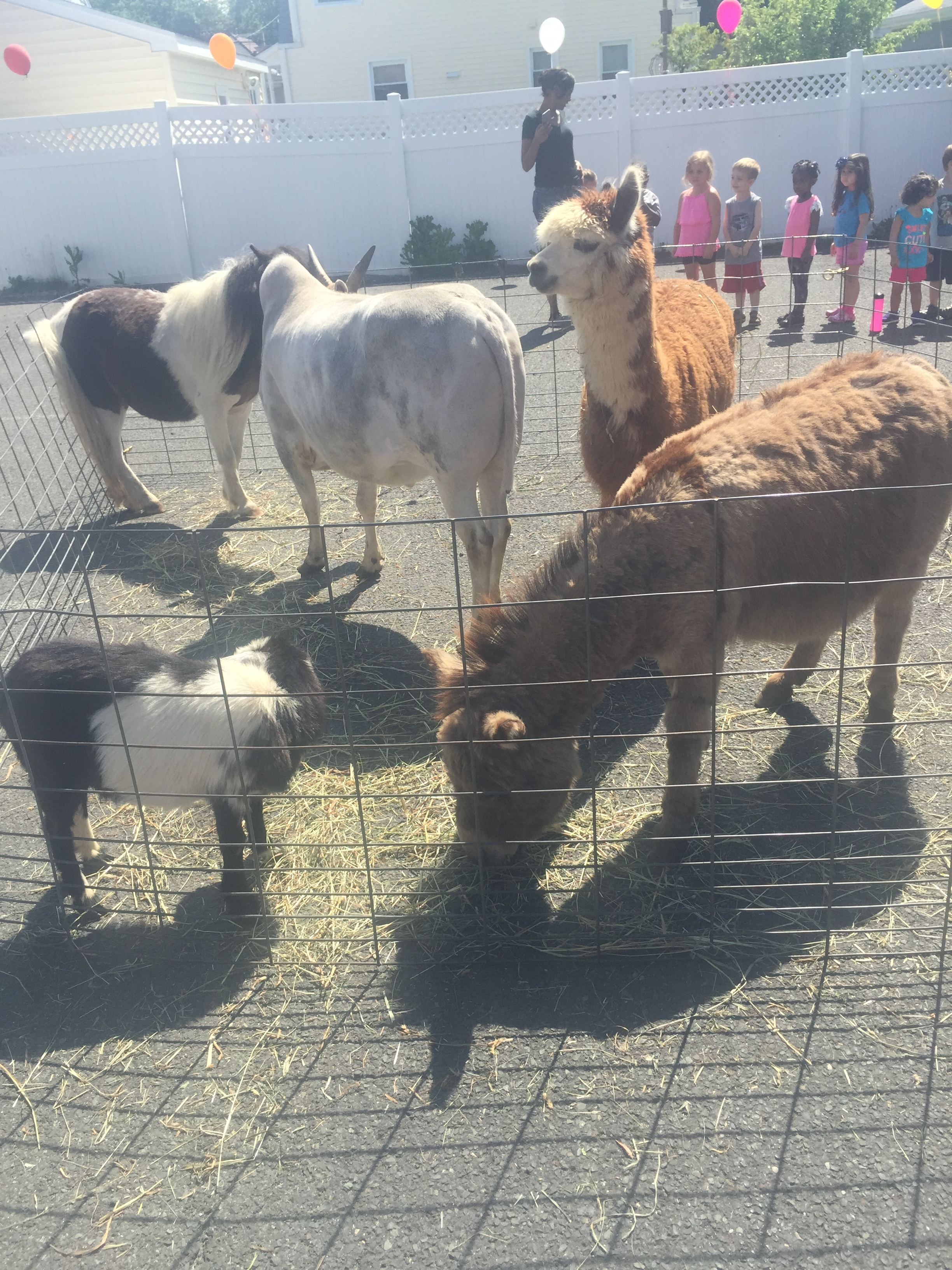 The Petting Zoo At School!