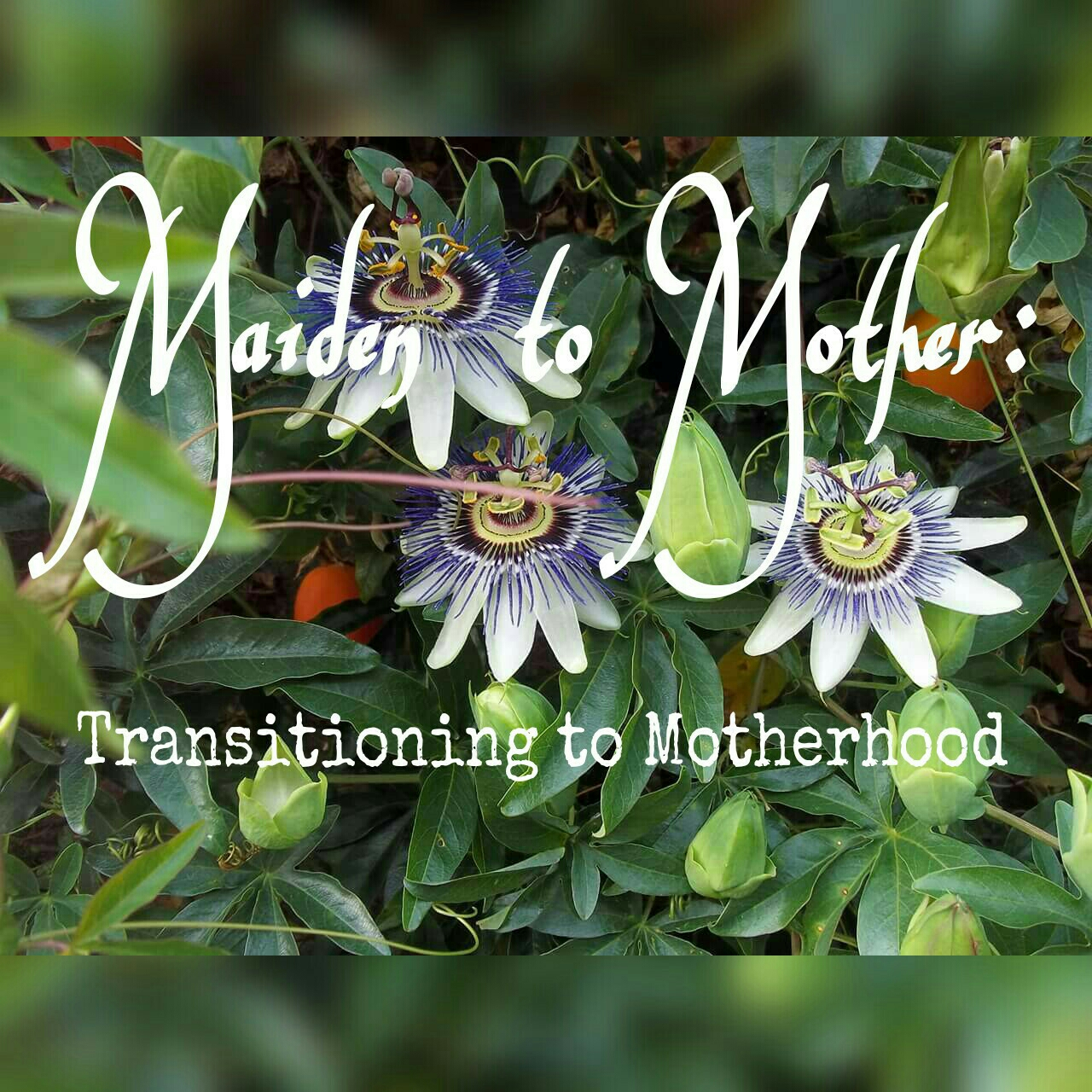 My new Facebook group - Just search 'Maiden to Mother - Transitioning to motherhood'.