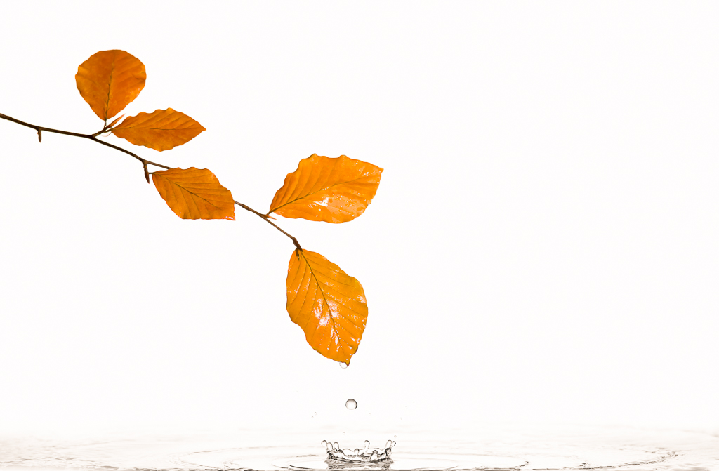 Autumn leaves, water drop and a splash