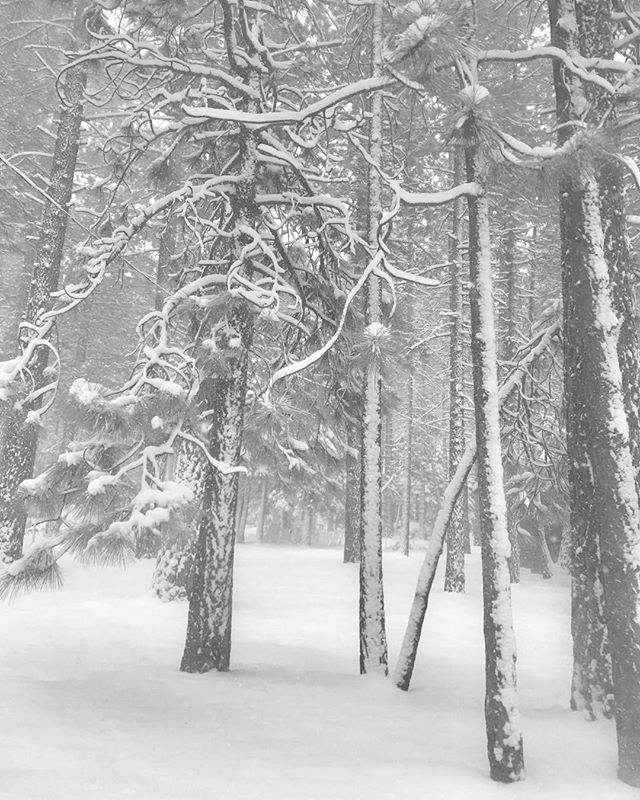 Lake Tahoe storm#snow#peaceful#black&white#photograher#forest#freshpowder