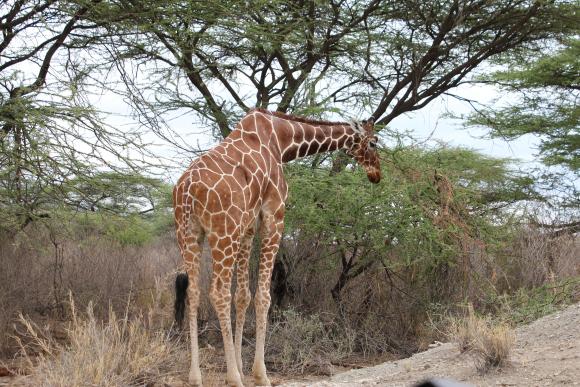 Just another beautiful morning in Samburu.