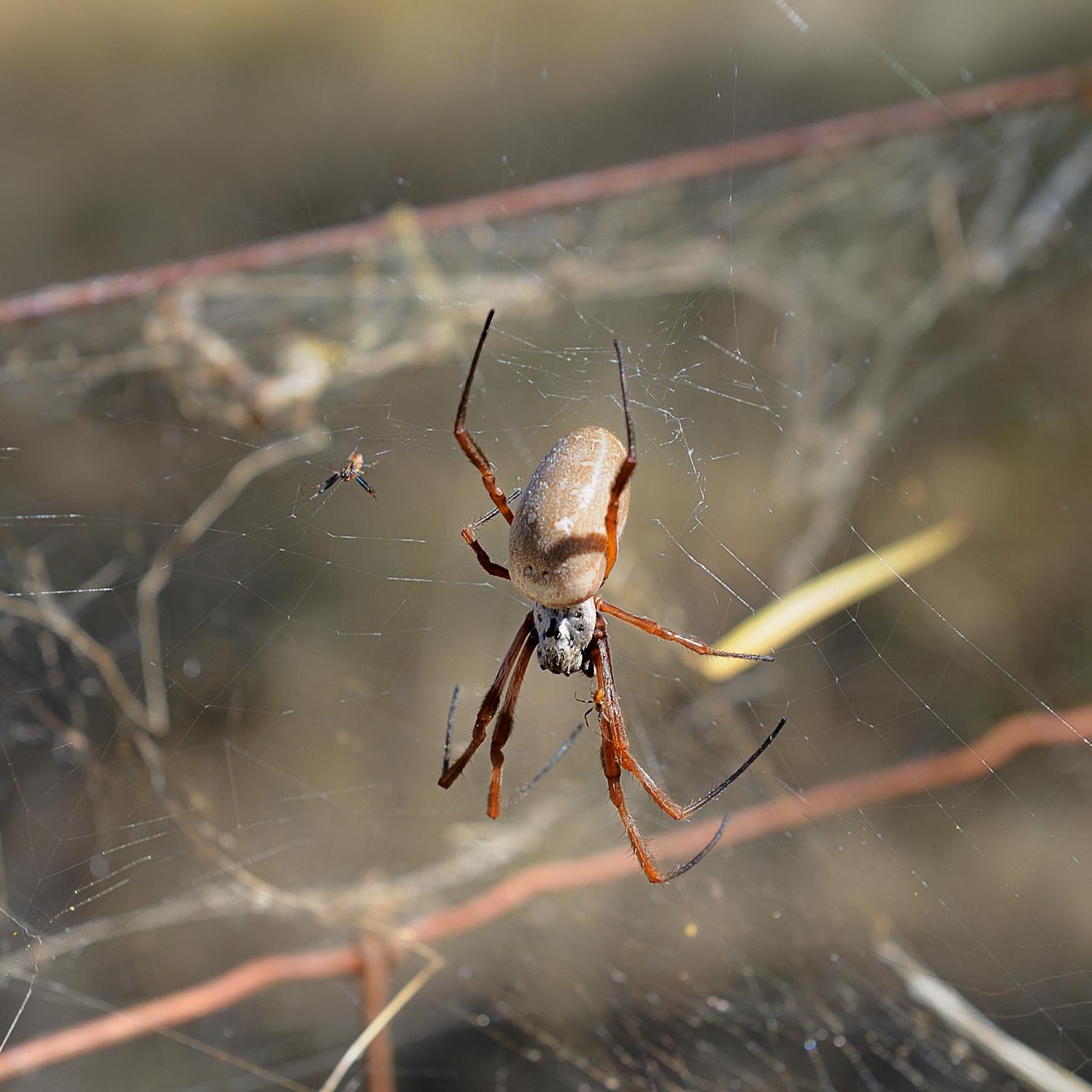 Spider D30_2221 Med.jpg