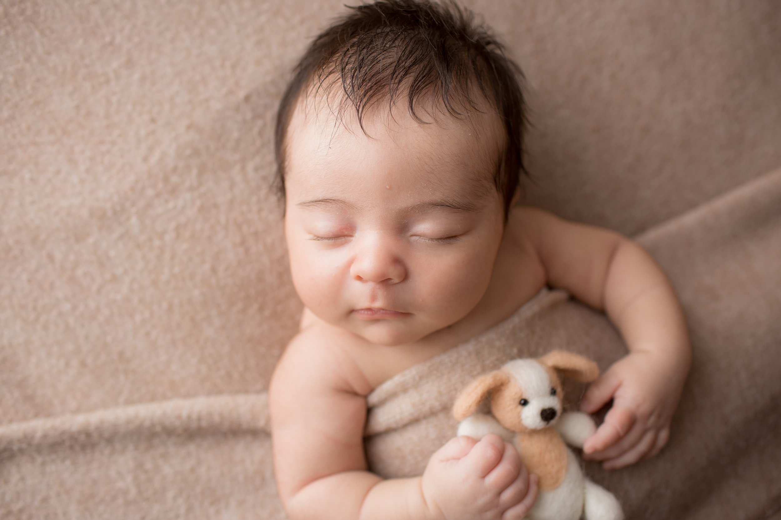 newborn baby boy under blanket holding a puppy for professional photo session.