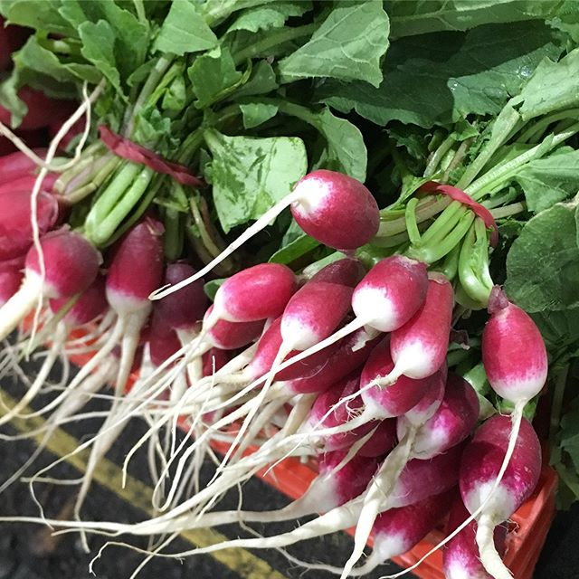 LOCAL FRENCH RADISH: Spectacular! #french #radish #sydney #markets #local #australiangrown #produce #chefsofinstagram #fresh #vegetables