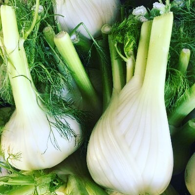 FENNEL: In abundance! Ideal for roasting, braising or in salads. #fennel #finocchio #roast #braise #salad #local #australiangrown #produce #sydneychefs  #sydney #chefsofinstagram #winter #vegetables