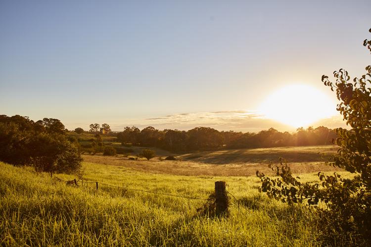 Rural Austral
