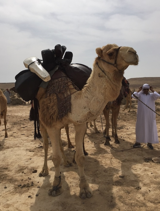Musical Dromedary Photo by Andy Teirstein
