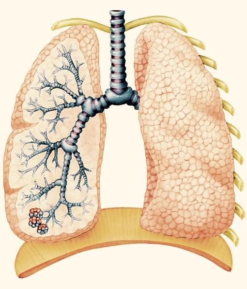 Lungerne flot billede kopi.jpg