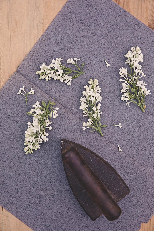 Lilac Hacks Foto Emily Dahl-1.jpg