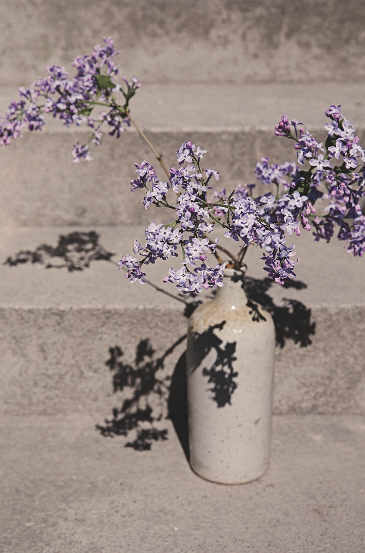 Lilac Hacks Foto Emily Dahl-4.jpg